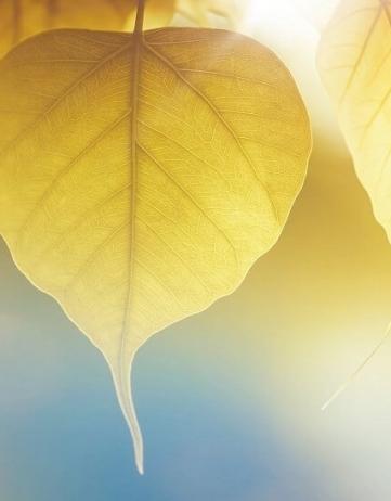 《十善業道經》—佛教中的十戒